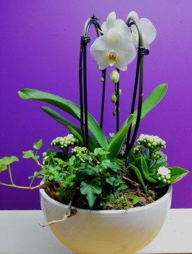 Orchidee arrangement Wit