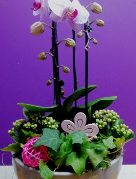 Orchidee arrangement Roze
